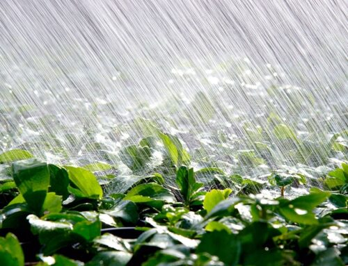 5 Water-Saving Irrigation Tips