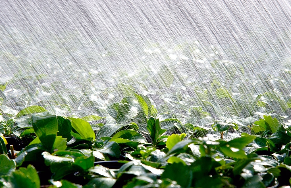 Water Saving Irrigation Tips